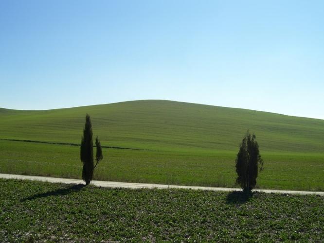 toscana-paesaggio-cipressi-by-stefanoacetelli-wikipedia-jpg
