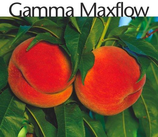 tradecorp-gamma-maxflow