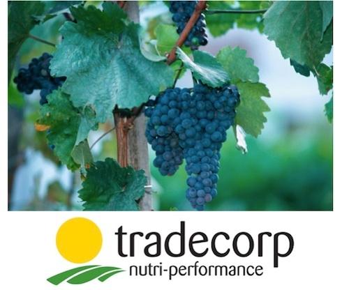 tradecorp-systamag-2014