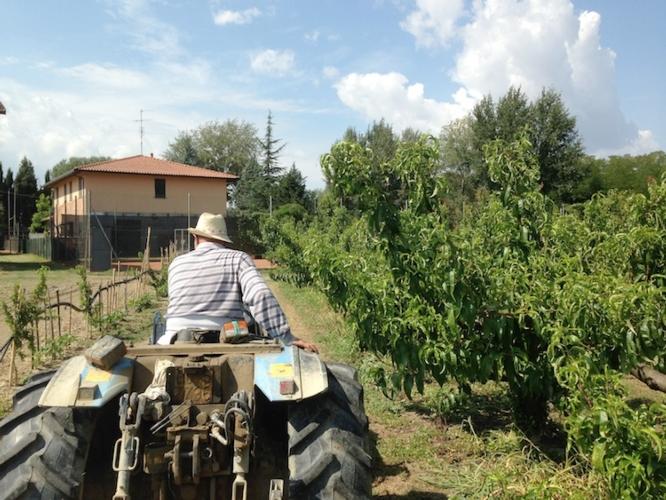 trattore-frutteto-macchine-agricole-pesco-pesche-agricoltore-azienda-agricola-by-cristiano-spadoni-750.jpg