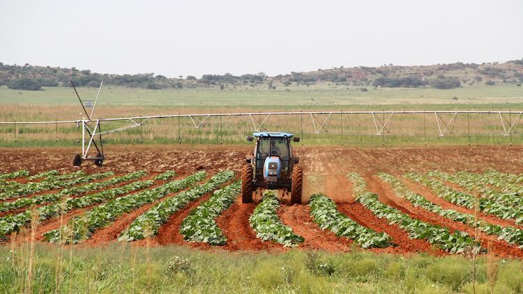 trattore-usato-lavoro-sudafrica-by-elizelombard-adobe-stock-750x422
