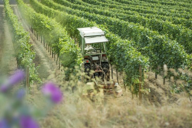 La gestione del suolo nell'interfila e nel sottofila del vigneto