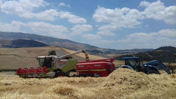 trebbiatura-grano-duro-gangi-19-lug-2020-cia-sicilia-occidentale