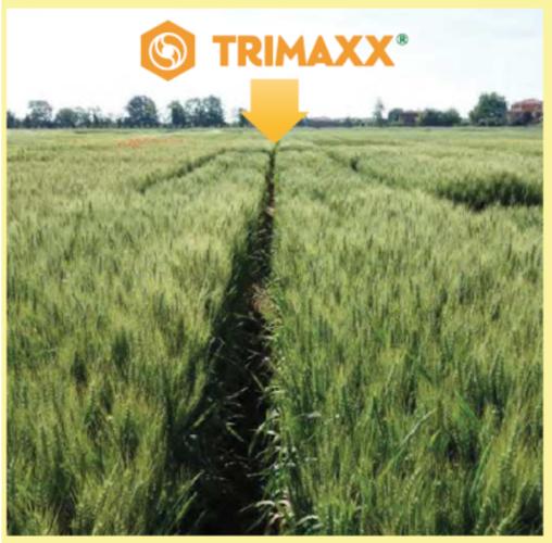trimaxx-fonte-sumitomo