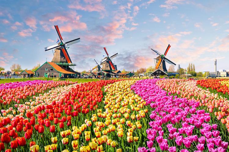 tulipani-olanda-mulini-by-olenaznakk-fotolia-750.jpeg