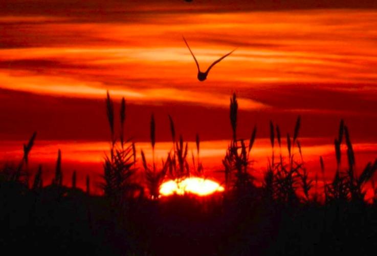 uccelli-selvatici-rete-natura-2000-by-gianluca-bedini-jpg