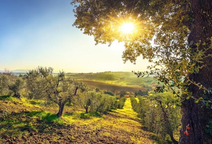 uliveto-oliveto-toscano-terzo-art-mag-2021-rosato-fonte-scapigliato-srl