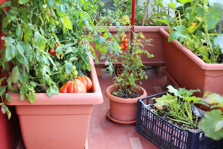 urban-farming-orto-balcone-chiccododifc-fotolia-750