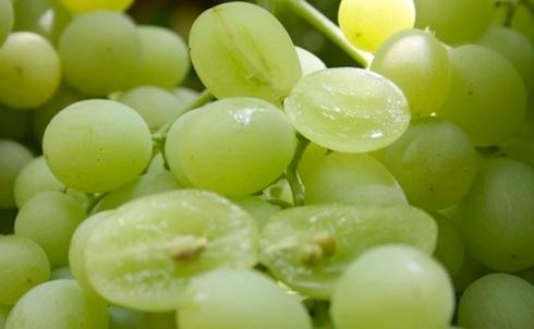 Uva da tavola il resoconto della tornata siciliana del 17 - Vivai rauscedo uva da tavola ...