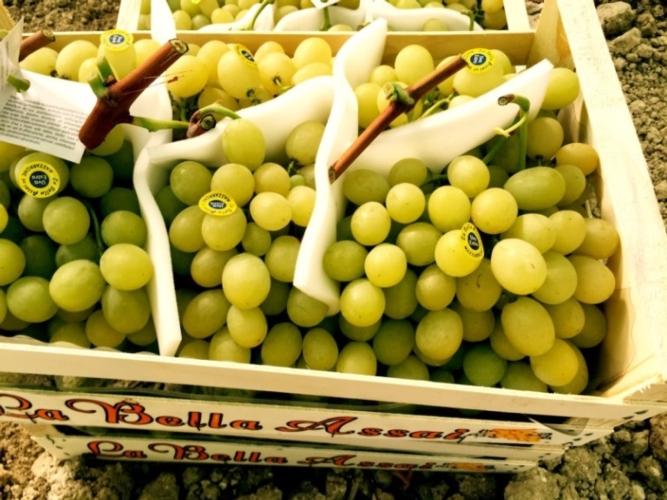 Uva da tavola senza semi aumenta la domanda - Uva da tavola coltivazione ...