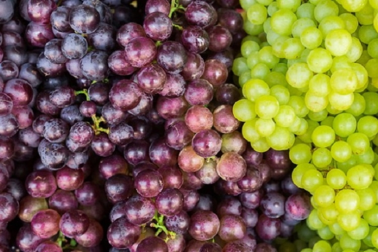Uva da tavola, la ripresa di un made in Italy - Plantgest news sulle varietà di piante