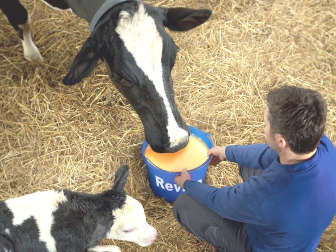 vacca-nutreco-effetti-metabolismo-26122015