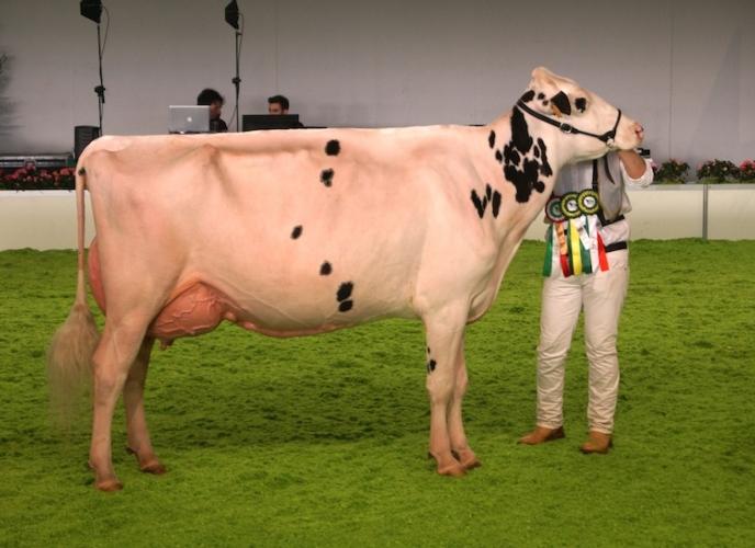 vacca-stanleycup-white-frisona-montichiari-2017-fonte-allevatori-top