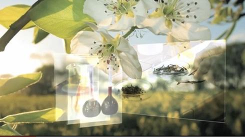 valagro-ascophyllum-petri-fiori