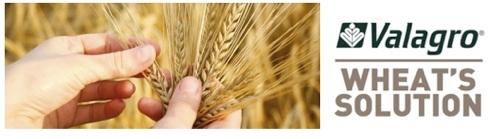 valagro-zinco-wheat-solution