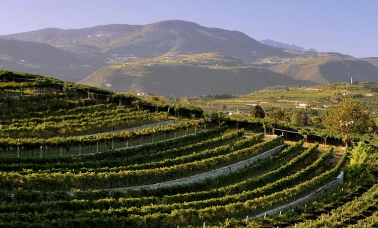 valpolicella-vitigno-fonte-consorzio-tutela-vini-valpolicella