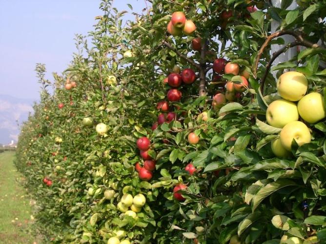 variabilita-colore-frutti-fonte-fem1