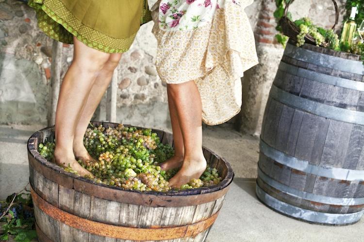 vendemmia-uva-pigiare-grappoli-by-cristina-conti-fotolia-750