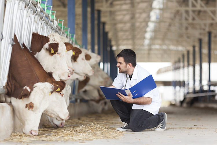 veterinario-allevamento-bovini-zootecnia-by-ellisia-fotolia-750