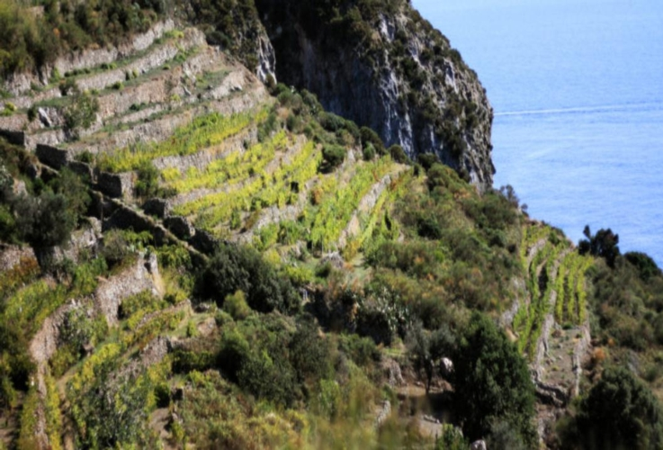 vigenti-ponza-viticoltura-eroica-by-arsial-jpg.jpg