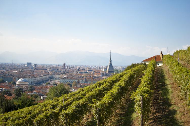 vigna-della-regina-vigneto-metropolitano-fonte-foto-azienda-vitivinicola-balbiano
