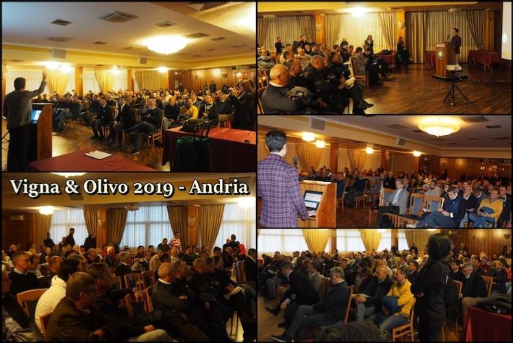 vigna-olivo-2019-750
