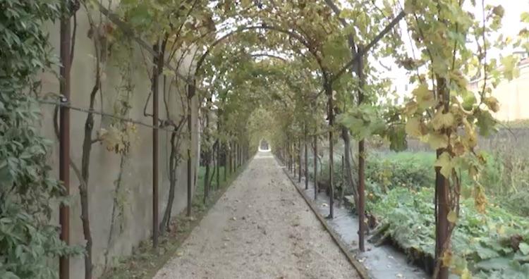 vigna-vite-vigneto-antico-donne-della-vite-evento-venezia-ott-2017-schermata-video-barbara-righini.jpg