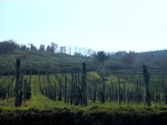 vigneti-baroni-di-ricasoli-gaiole-in-chianti-marzo-2010