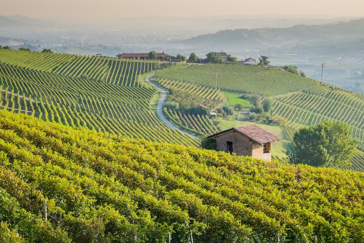 vigneto-filari-colline-langhe-by-giorgio-pulcini-adobe-stock-750x500