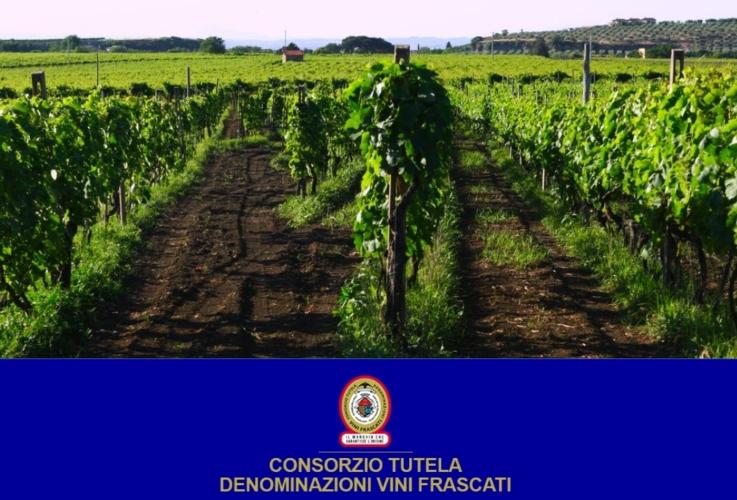 vigneto-frascati-doc-logo-by-consorzio-tutela-denominazione-vini-frascati.jpg