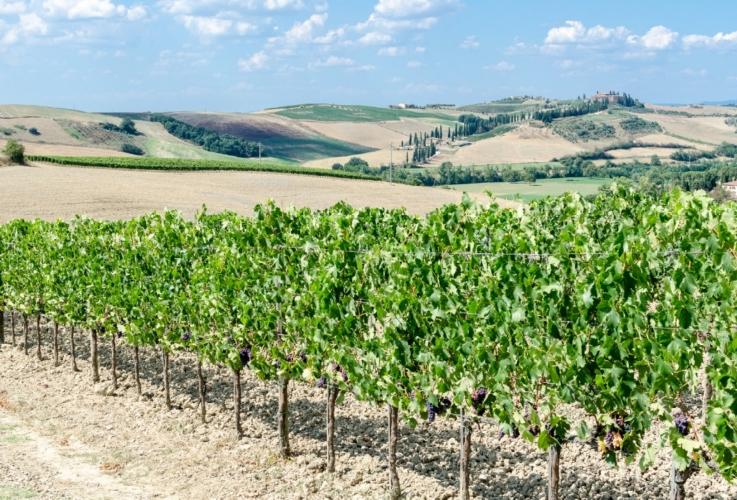 vigneto-toscana-paesaggio-by-luca-casartelli-wikimedia-jpg
