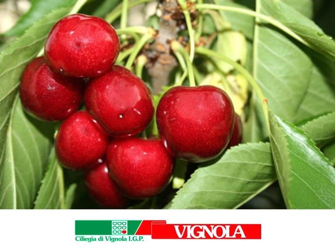 vignola21