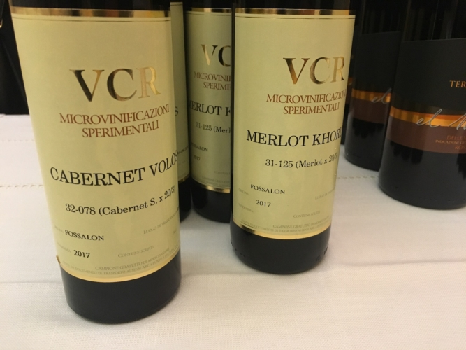 vinificazione-viti-resistenti-vcr
