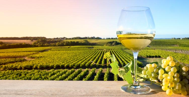 vino-bianco-bicchiere-vigneto-vigna-vite-by-thierry-ryo-fotolia-750.jpeg