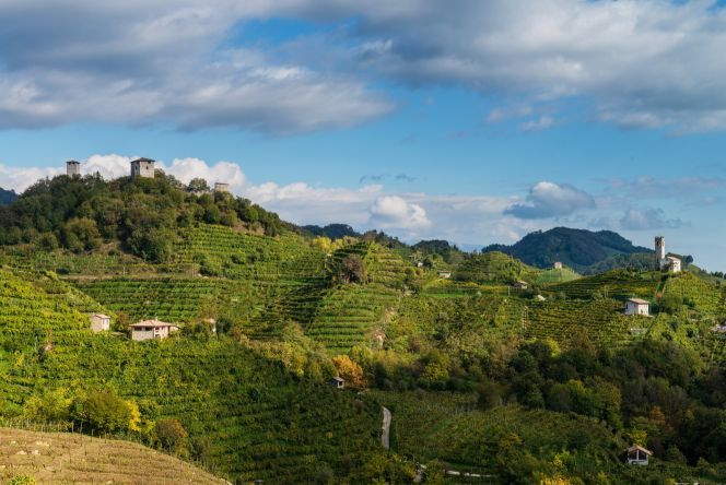 vino-paesaggio-fonte-consorzio-di-tutela-del-conegliano-valdobbiadene-prosecco-superiore-docg