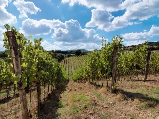 vino-ruffino-vigneto-vite-tenuta-toscana-fonte-ruffino.jpg