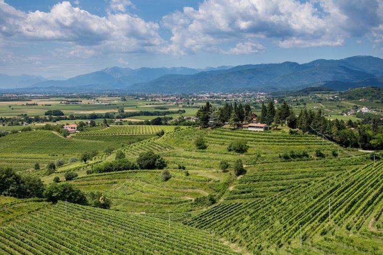 vino-vini-annata-viticola-fonte-friuli-colli-orientali-ramandolo.jpg