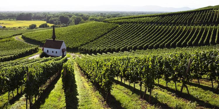 vite-montagna-viticoltura-estrema-by-wieselpixx-fotolia-750.jpeg