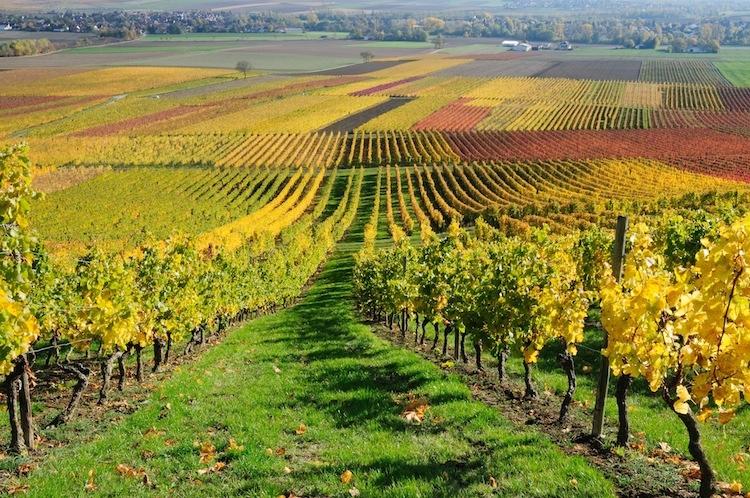vite-vigneto-campo-autunno-felinda-fotolia-750x498.jpeg