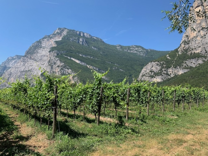vite-viticoltura-montagne-cantina-toblino-ago-2019-rubrica-agroinnovatori-nov-2019-fonte-ivano-valmori