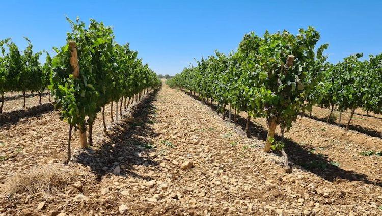vite-vitigno-fonte-seipasa