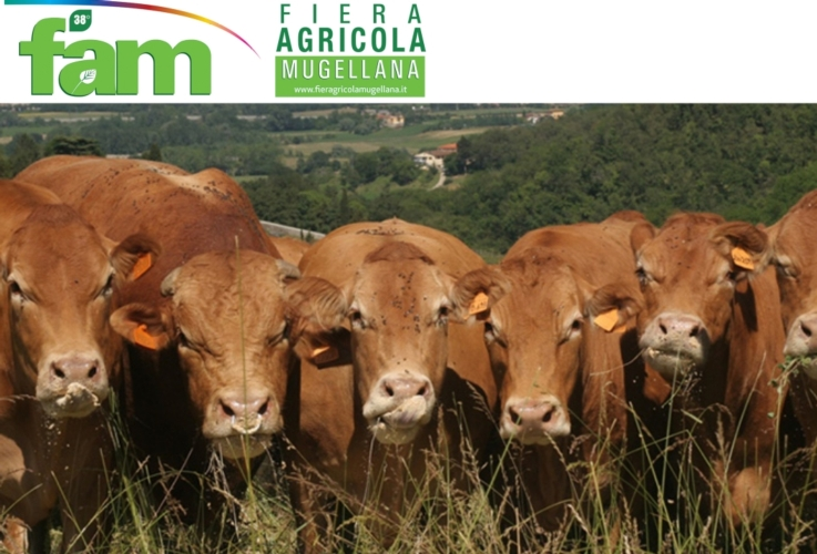 vitelli-logo-fiera-agricola-mugellana-by-fiera-agricola-mugellana-jpg