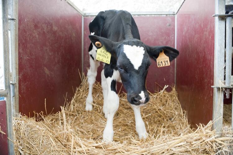 vitello-nutreco-redazionale-9