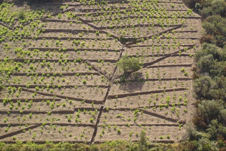 viticoltura-eroica-cervim