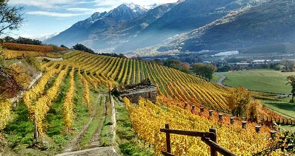 viticoltura-eroica-fonte-enovitis-extreme-20180719