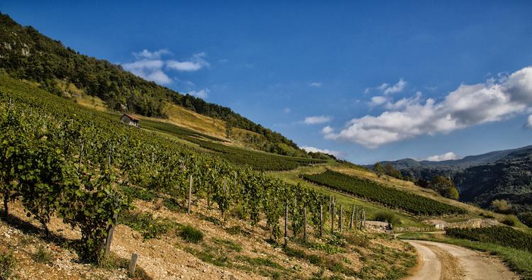 viticoltura-eroica-vitivinicoltura-montagna-by-nmnac01-fotolia-750