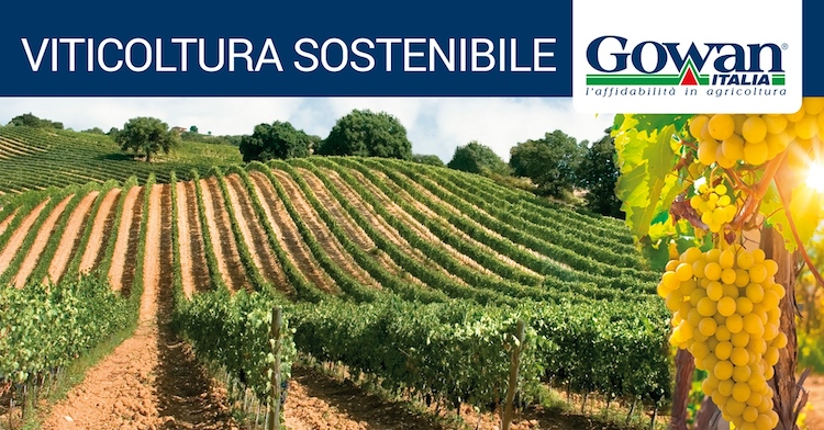 viticoltura-sostenibile-fonte-gowan.jpg