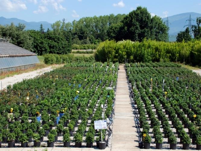 Vivaismo risparmiare acqua si pu agronotizie for Piante da frutto pistoia