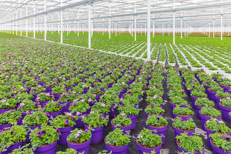 vivaismo-floricolo-fiori-florovivaismo-serre-by-dutchscenery-fotolia-750-1
