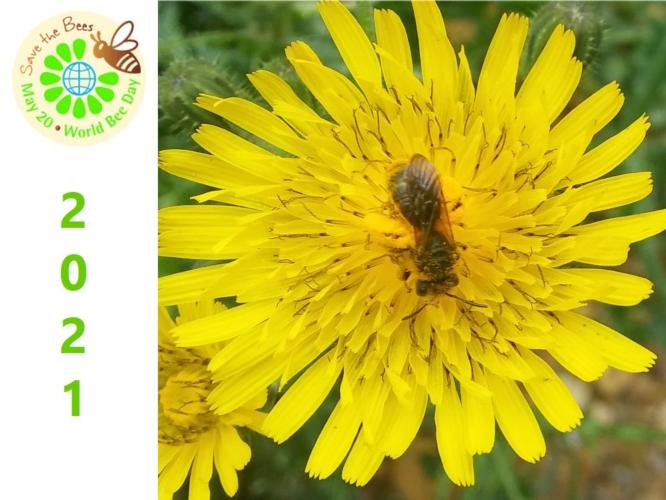 world-bee-day-2021-giornata-api-by-matteo-giusti-agronotizie-jpg.jpg